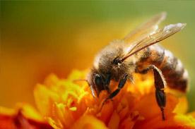 tour-apiario